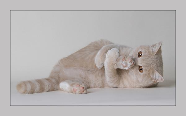 楽して結構効果的☆猫背の原因を排除する・7つの生活改善術